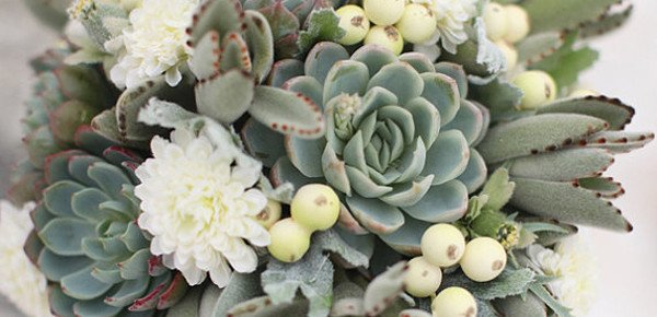 Winter Wedding Idea: Succulents