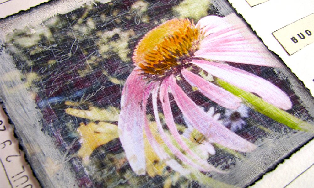 Altered Coneflower Instagram Photograph